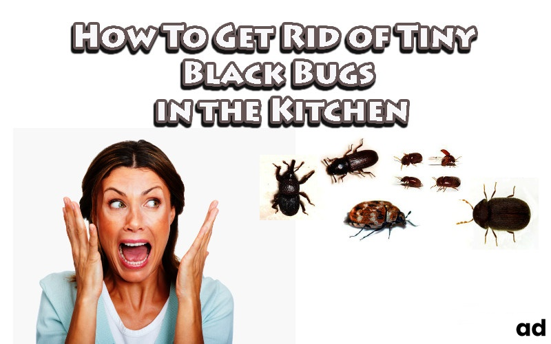 How-To-Get-Rid-of-Tiny-Black-Bugs-in-the-Kitchen